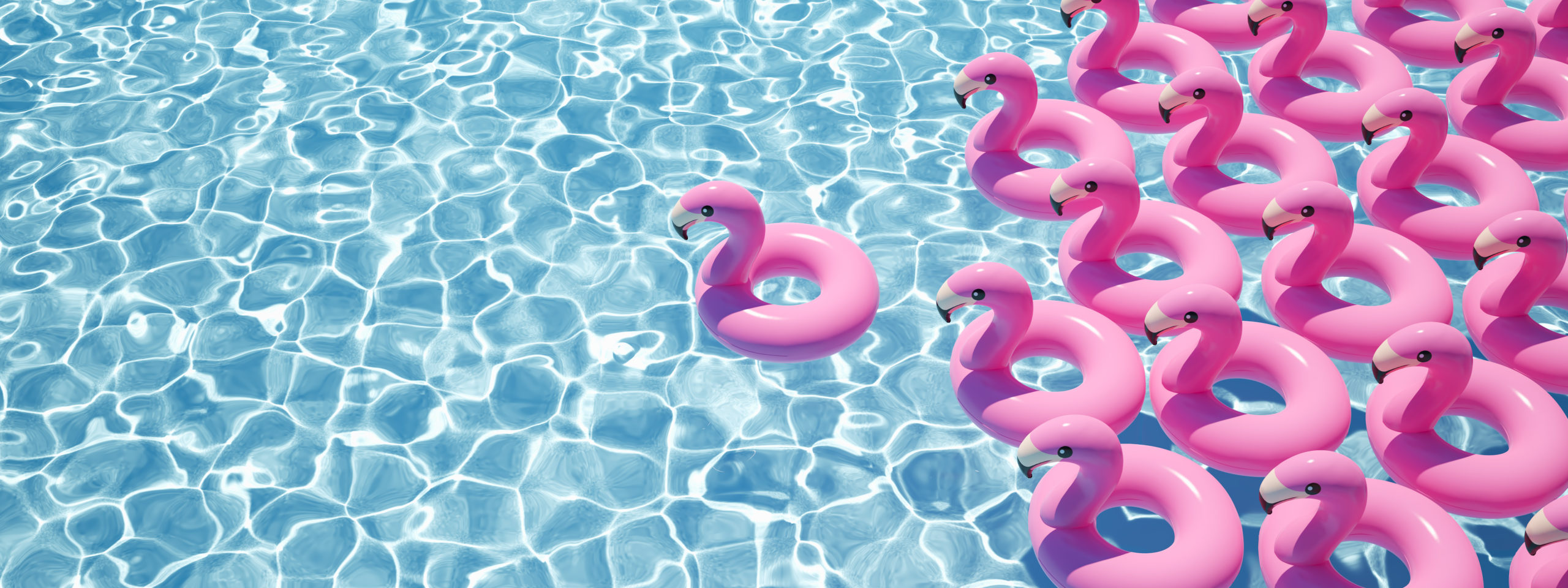 contact entreprise swim